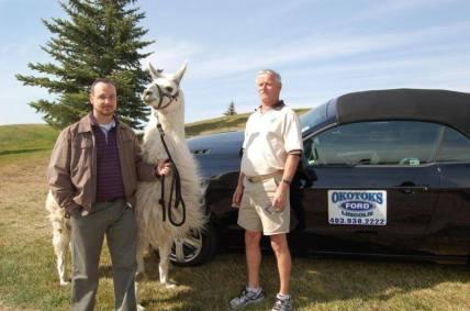 Llama Classic (2012-09-15) (36)
