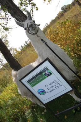 Llama Classic (2012-09-15) (43)