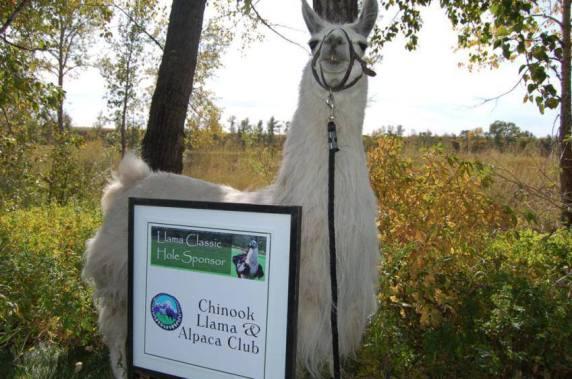 Llama Classic (2012-09-15) (46)