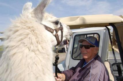Llama Classic (2012-09-15) (51)