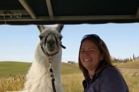 Llama Classic (2012-09-15) (56)