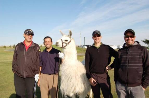 Llama Classic (2012-09-15) (66)
