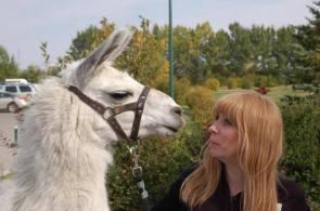 Llama Classic (2012-09-15) (84)